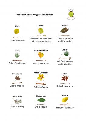 Leaf ID Magic